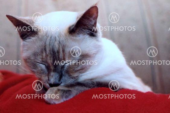 Napping kissa
