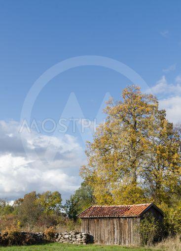 Höstlandskap med stort träd och ett gammalt uthus