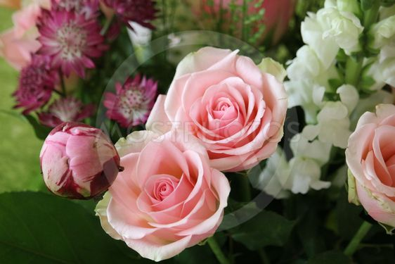 Blommar