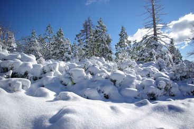 High Sierra Forest