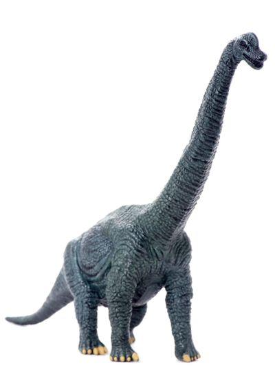 dinosaur isolated on white