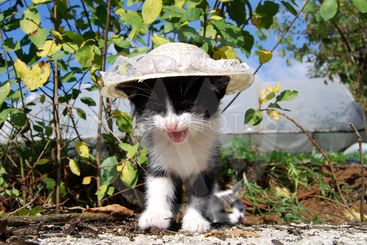 The cat with hat