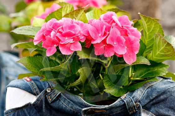 Spring flower in the jeans