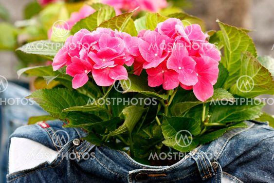 Foråret blomst i Cowboybukserne