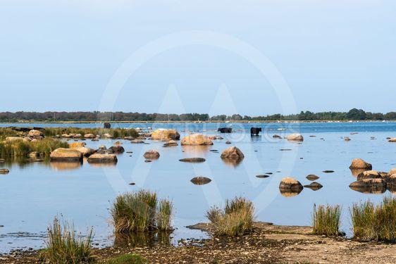 Stranden vid Grankullaviken i Vargeslätts naturreservat...