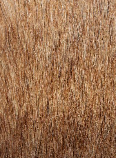 texture, background, hair, dog hair, yellow, brown