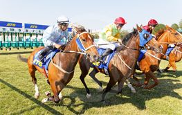 Start of the gallop race for arabian gallop race horses...