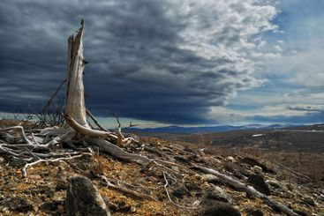 Thundercloud above a dead forest