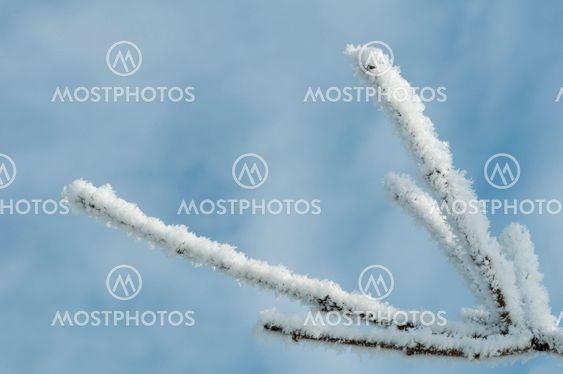 Snedækket træet trunke