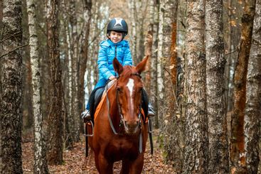 Little girl on an adult brown horse on the background of...