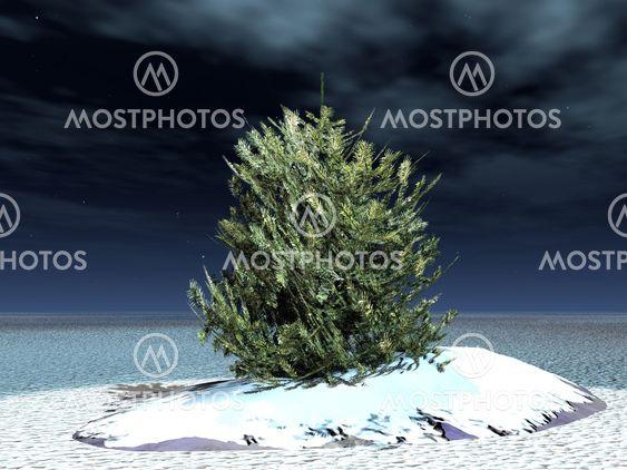 turkis-puu