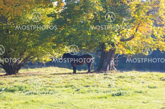 Horse under a tree