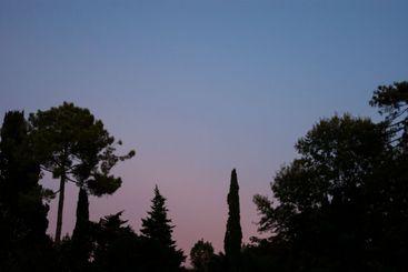 Purple sunset over black trees