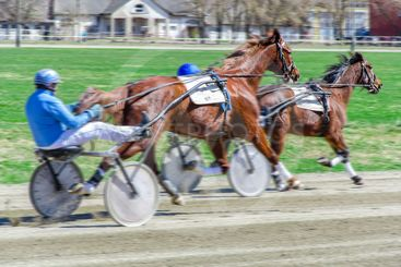 Harness racing. Racing horses harnessed to lightweight...