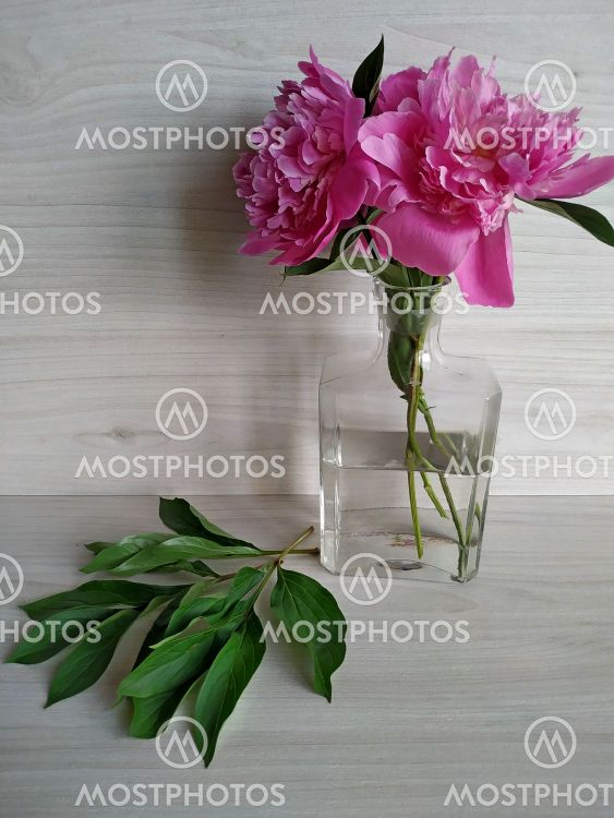 peonies standing in a transparent vase and green leaves...