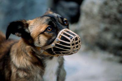Hund med munskydd
