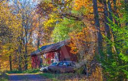 Barn in the forest in the autumn with old cars