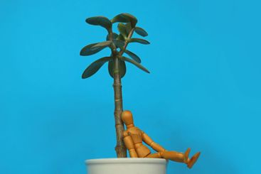 Wooden mannequin sitting on the edge of a white plant...