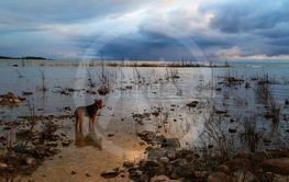 Contemplative dog at the lake