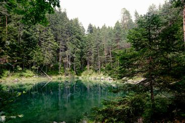 lake among the forest