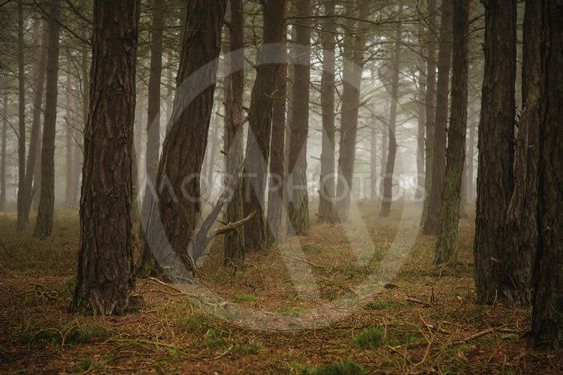 Skog i Skanör