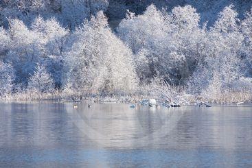 Vinter vid Bysjön