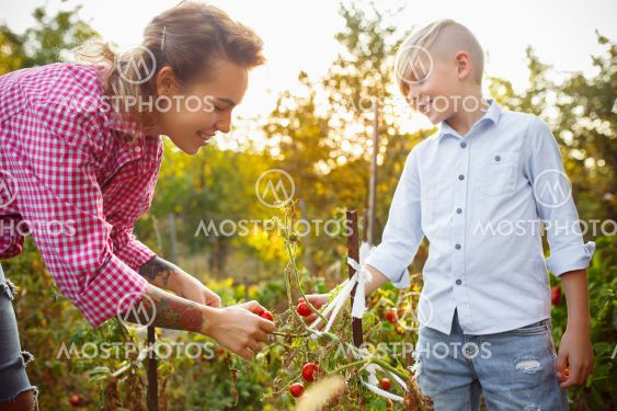 Happy young family during picking berries in a garden...