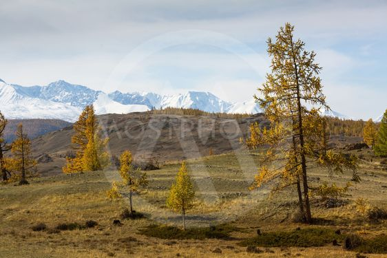 View of the foothills and autumn forest on a background...