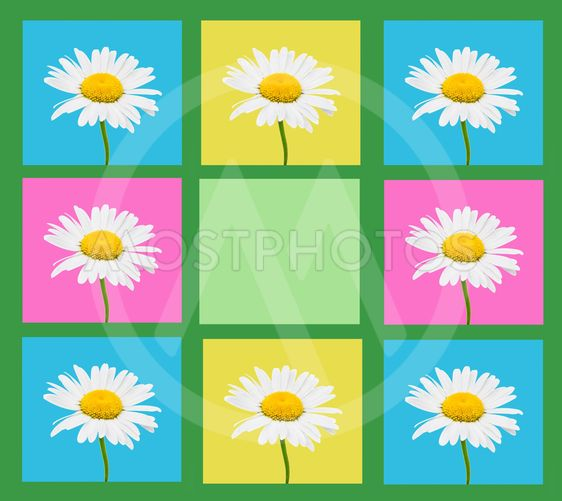 Composition of camomile flowers in a frame