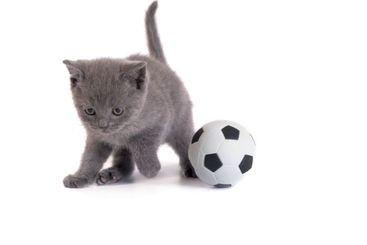 Kitten and a football on a white background