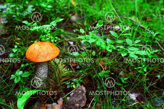 orange mushroom and black berries