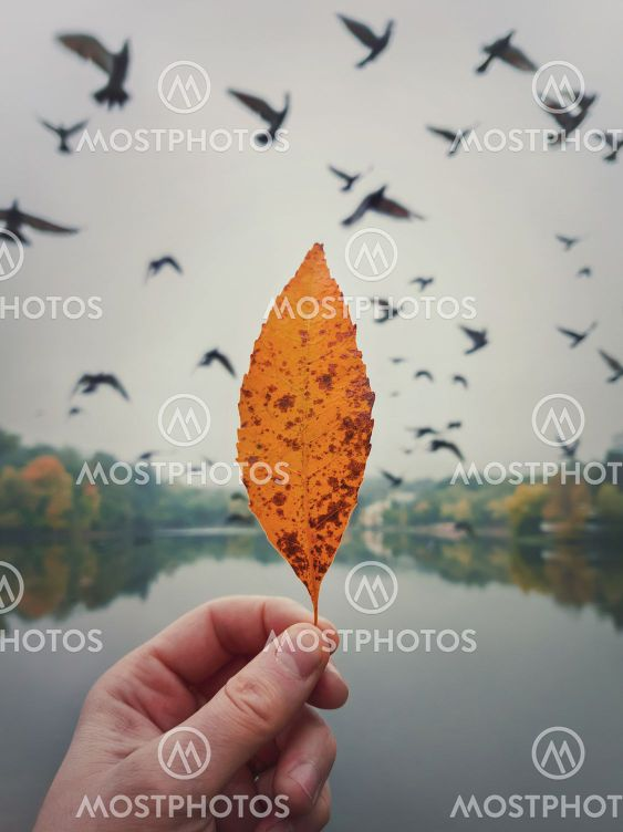 Male hand holding a yellow leaf against the cloudy sky...