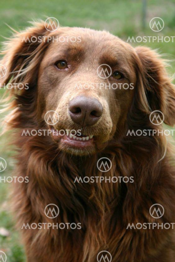 Terapi hund