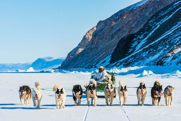 Musher and his dogs on a tourist dog sledge trip