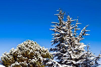 Snowy trees on blue sky