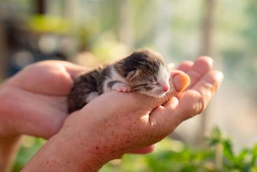 newborn kitten in hands of a person.