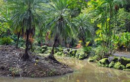 Tropical garden and pond