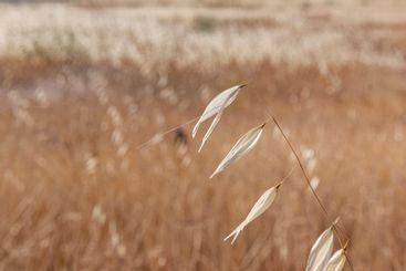 agricultural landscapes of cereals in spain