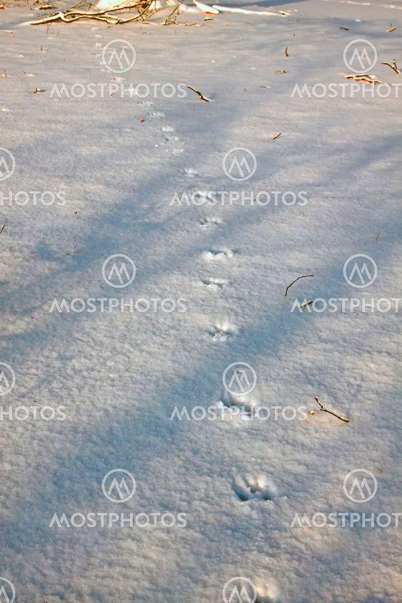Snow with animal tracks.