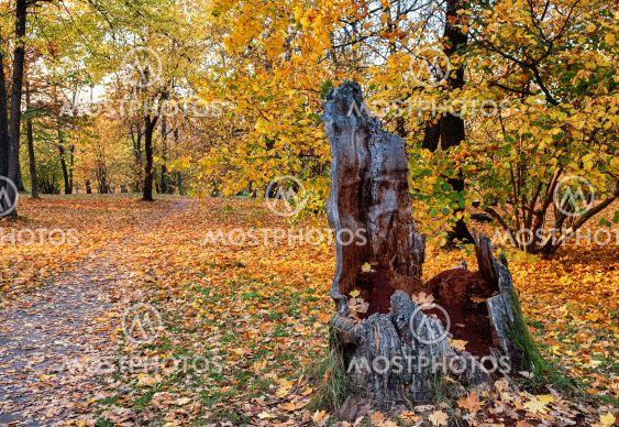 Trail through autumn landscape.