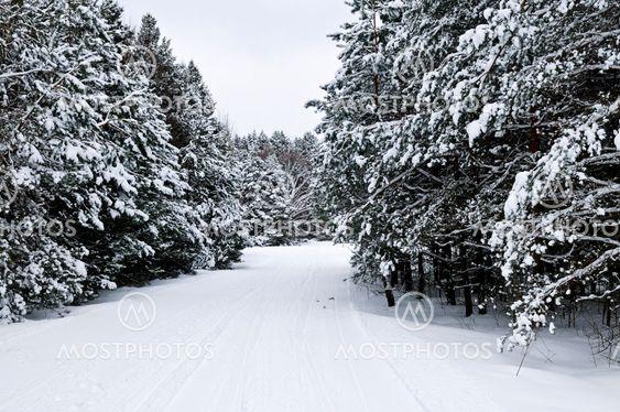 Vinter landskab