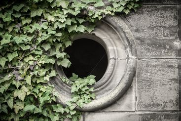 Gothic window with ivyberry