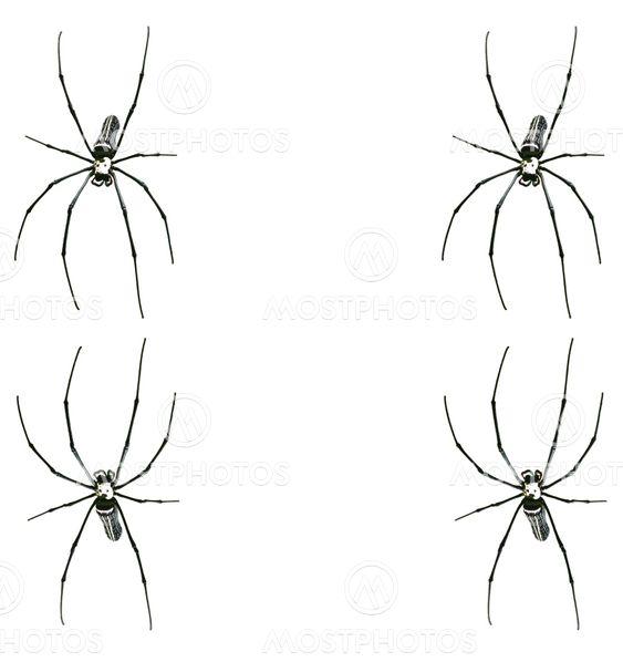 Spider ramme