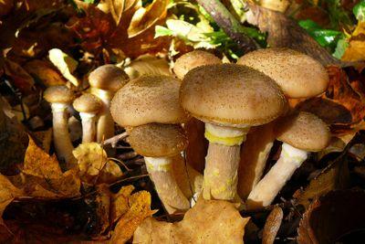 group of nice mushrooms