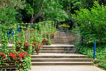 staircase in the cozy park