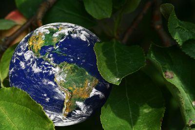 Earth growing in a tree