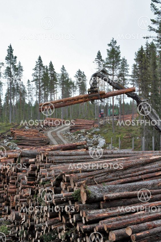 Loading the log truck