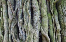 Många grenar små