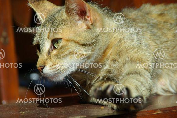 Katze - cat 13