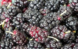 Juicy mulberry